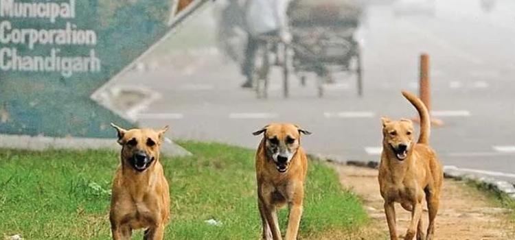 कुत्तों को नहीं पकड़ेगा निगम लेकिन काटने पर कराएगा फ्री इलाज!