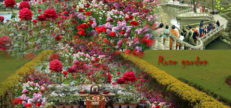 Beautiful And Amazing Images Of Rose Garden Chandigarh