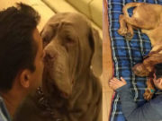 Salman Khan's Pet