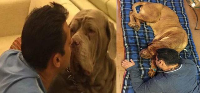 Salman Khan's Pet