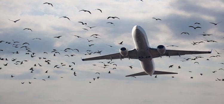 Bird Hitting Cruising