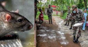 Rat Fever In Kerala